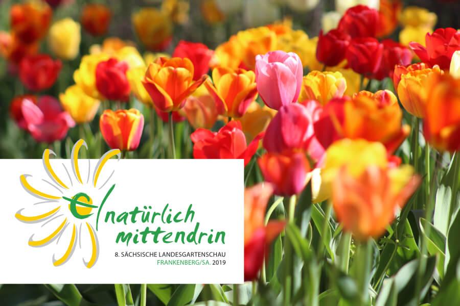 Landesgartenschau 2019